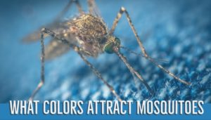 what colors attract mosquitoes