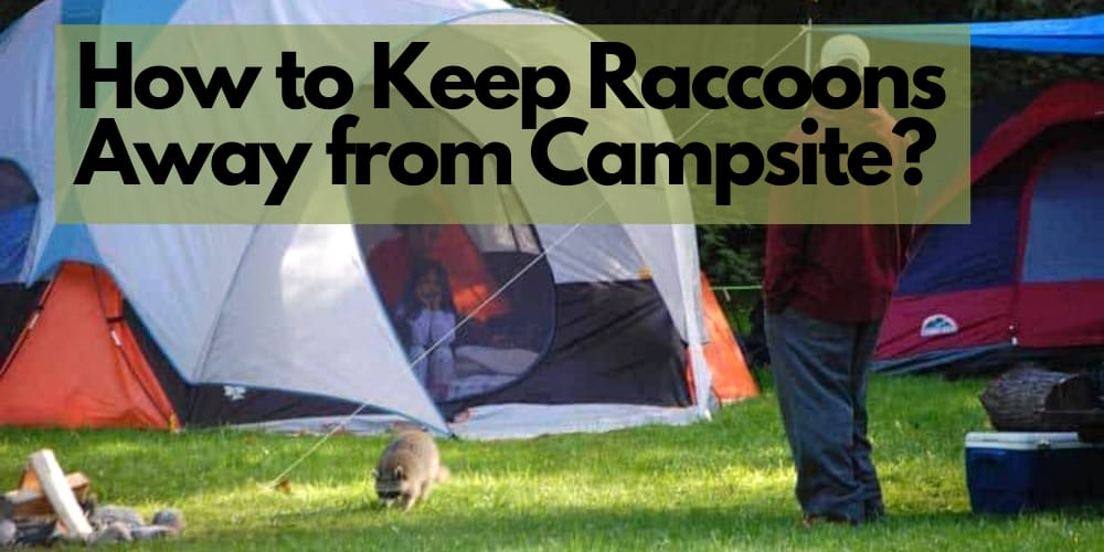 how to keep raccoons away from campsite