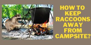 keep racoons away from campsite
